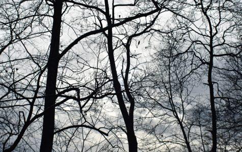 Winter Trees Chaitanya Kadimisetty