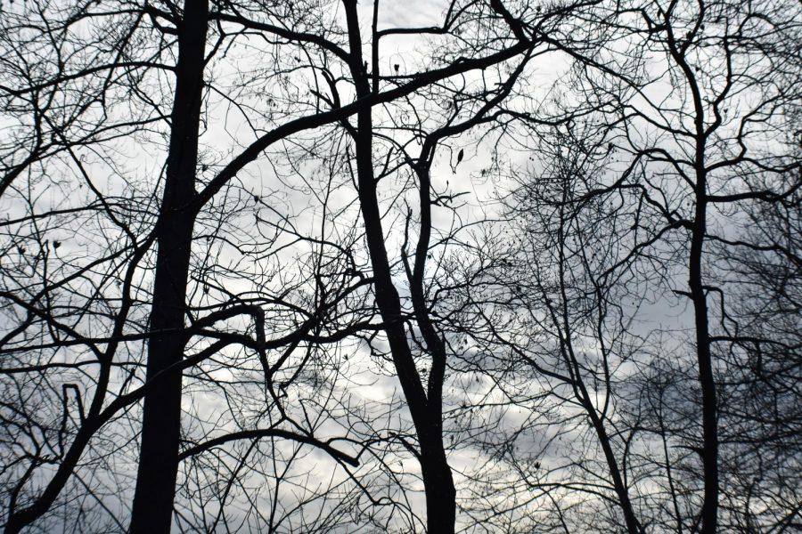 Winter+Trees+Chaitanya+Kadimisetty